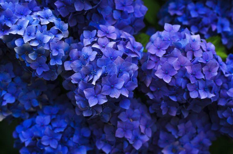 Verezzi in Fiore 2017 dal 14 aprile al 14 maggio angoli fioriti nelle quattro borgate di Verezzi